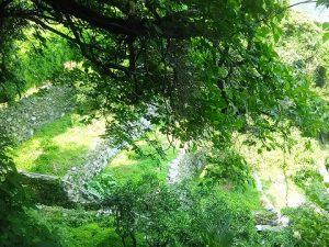 伸びた雑木