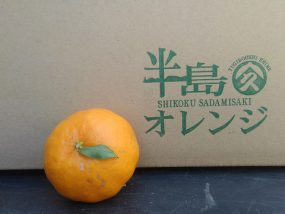 半島オレンジ