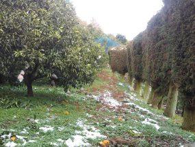 園内の積雪状況