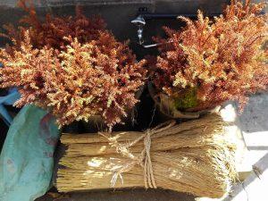 杉苗の保存