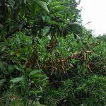 枯れ枝の処理と剪定作業で病害防止!