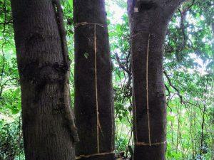 雑木の巻枯らし2