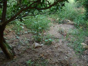 イノシシの掘った跡