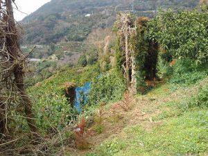 防風垣の補植1