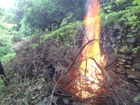 剪定枝の焼却