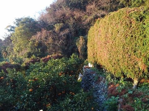 朝日を浴びた園地