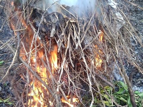 枯れた小枝の焼却