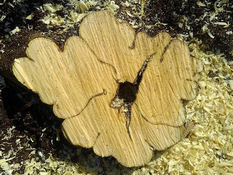 枯れた木の切り株